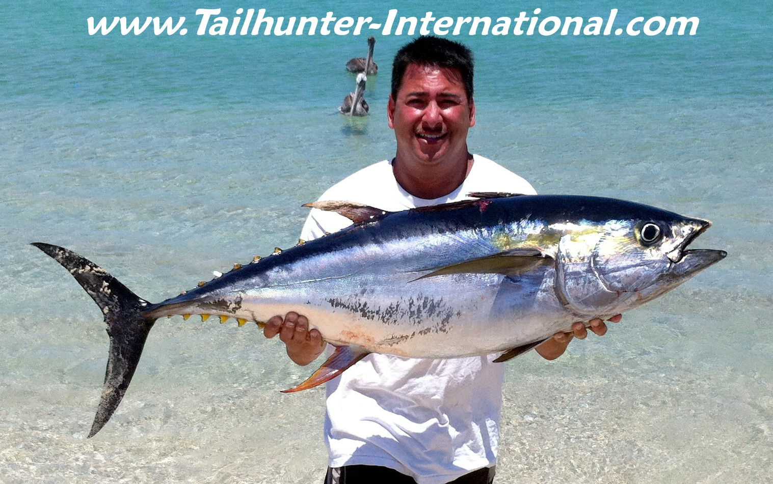 La paz las arenas fishing report from tailhunter for What does a tuna fish look like