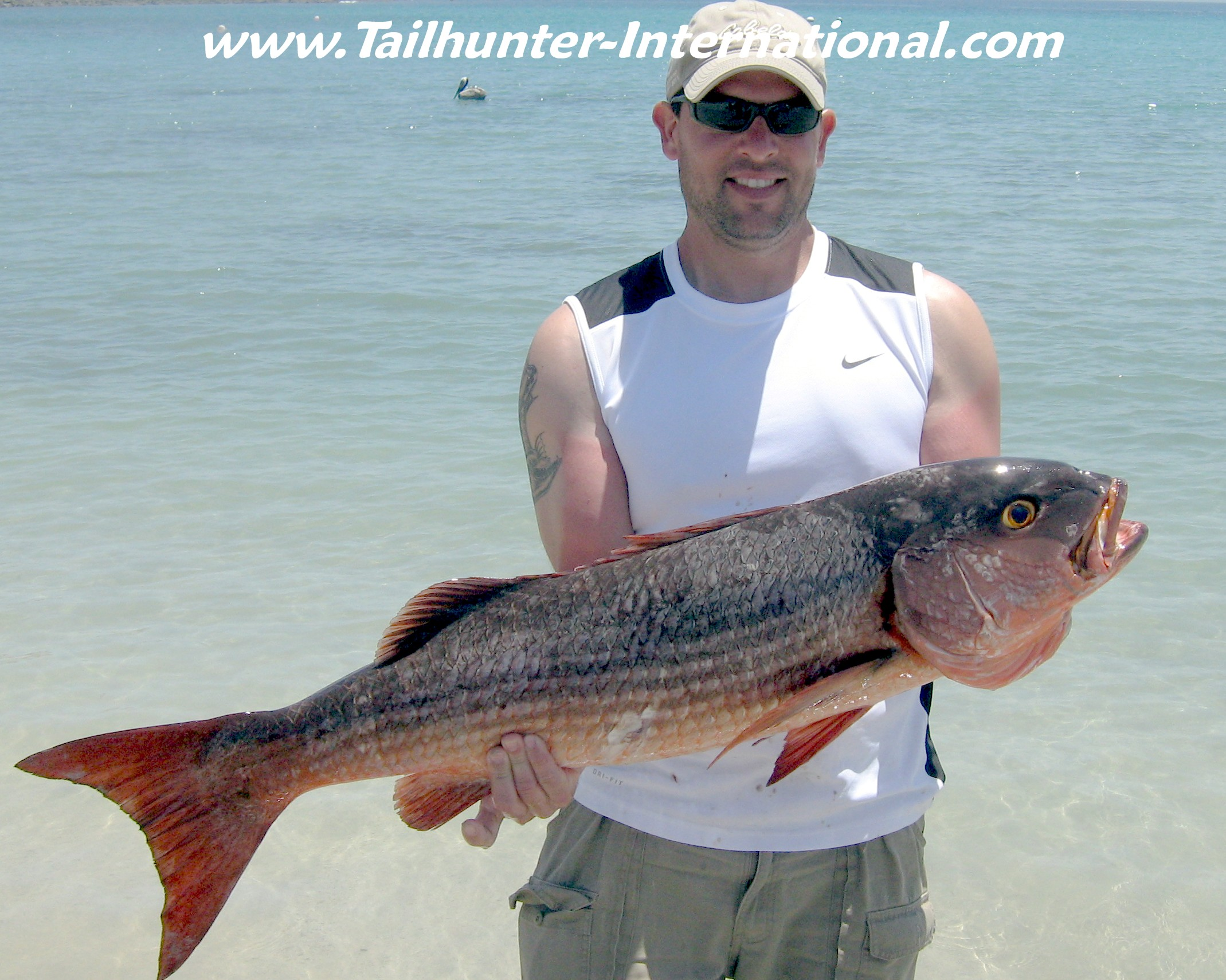 Tailhunter la paz las arenas report april 23rd 2011 get for Fred the fish