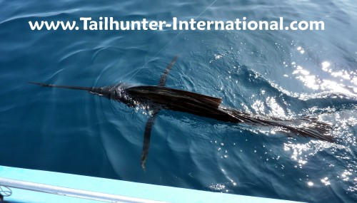 Sailfish tags