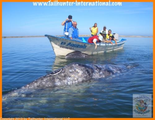 whaleswdennis 410-proc