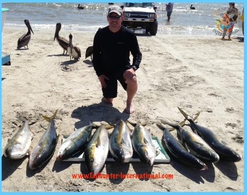 yellowtail darrell rogers 2-13