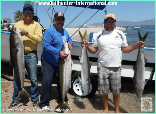 Yellowtail fabio amigos 3:13 tags
