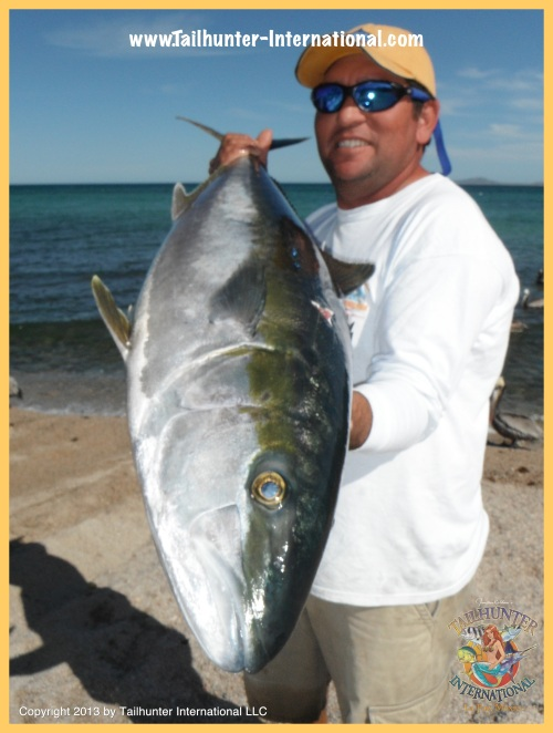 yellowtail fabio tags 3-13
