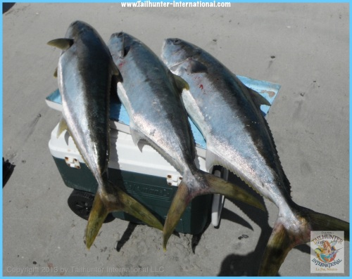 yellowtail rack tags 3-13