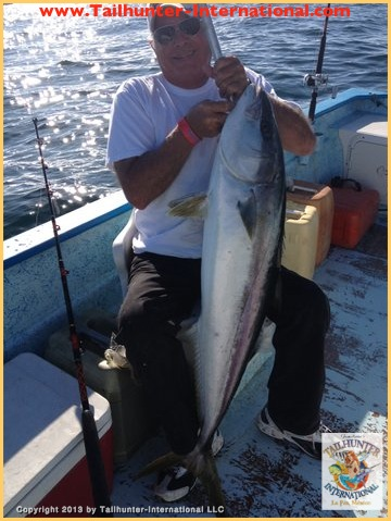 yellowtail tags cavelini 3-13