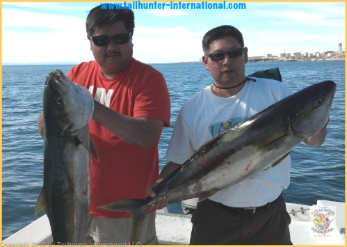 yellowtail chun 1 - 4-13 tags