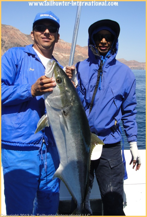 yellowtail verda tags 4-13