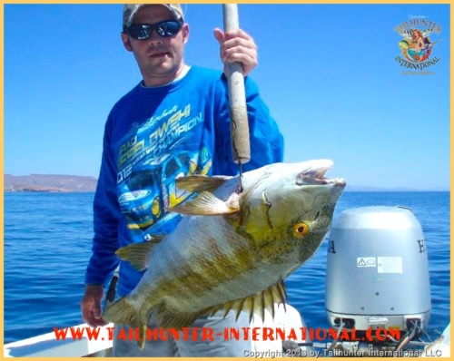 Andrew McCormick pulled up this fat barred pargo near Espirito Santo Island working a live bait near the rocks.  Great eating fish!  Andrew is from the Portland OR area.