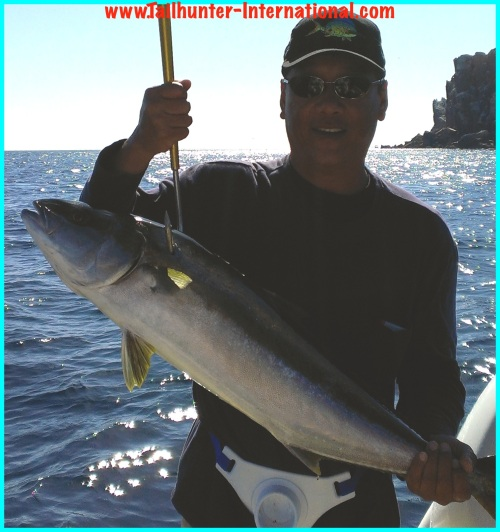 yellowtail kevin chang tags 5-13