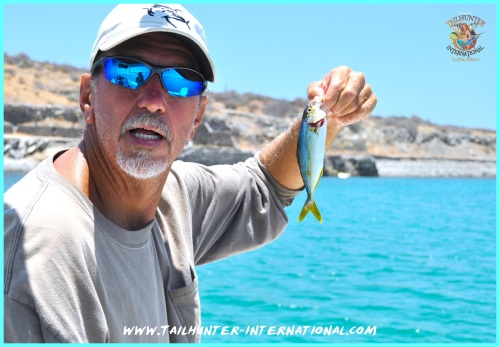 Big yellowtail roger 6-13 tags