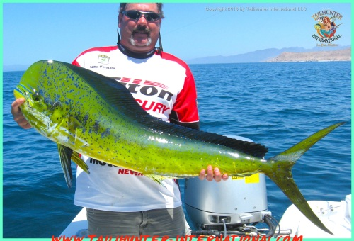 Dorado whitlow 2 6-13 tags