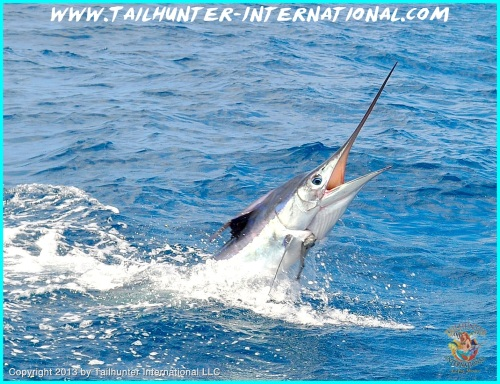 marlin tags 5-13