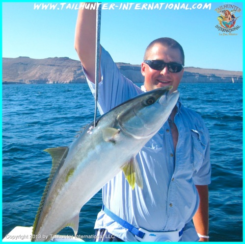 yellowtail ehlers 5-13 tags