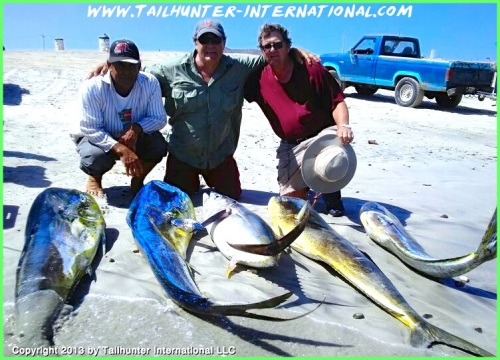 Hosmer dorado tuna 7-13 tags