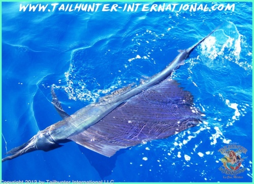 SAILfish tags small 8-13