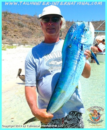 Wade dorado Big Blue 8-13 small tags