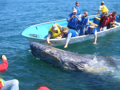 ballenas (16)