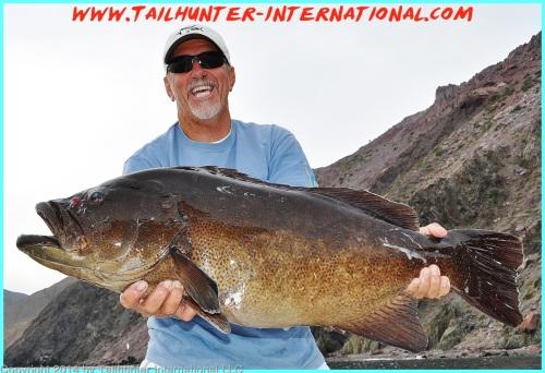 Cabrilla huge roger thompson tags 1-14-proc