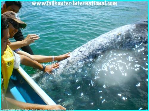 whales1-proc
