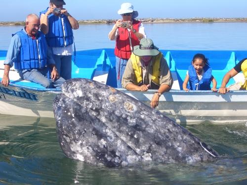 whaleswdennis 407