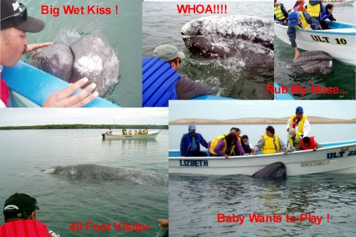 Whalewatchcollage300tags