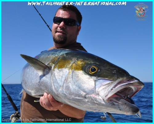 Joe yellowtail tags small 2-14