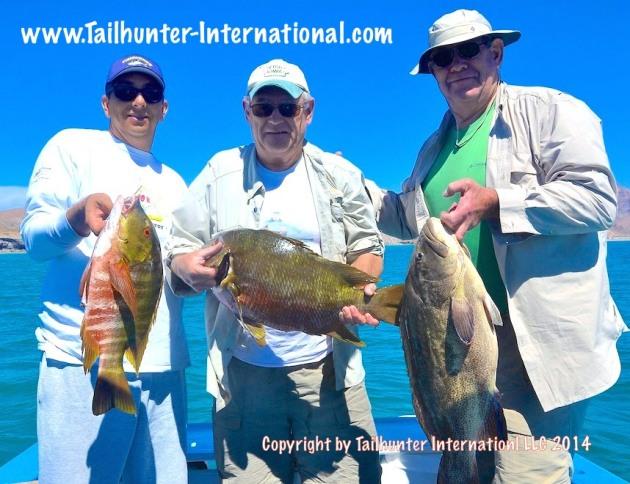 cabrilla pargo brown brothers joel tags 3-14