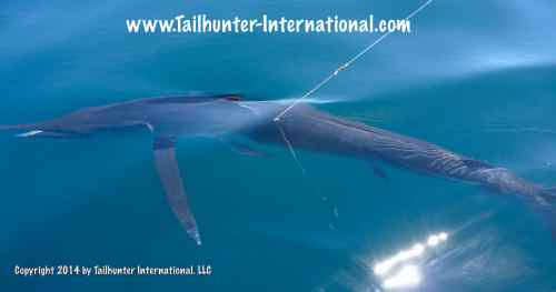 striper in water tags 4-14