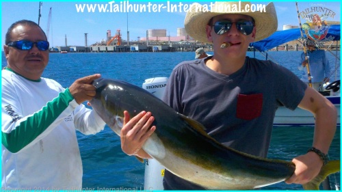 yellowtail peter koschnitzke small tags 4-14