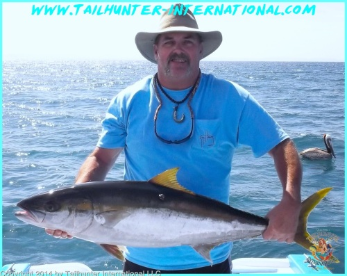 yellowtail Tim Butterworth tags small 4-13