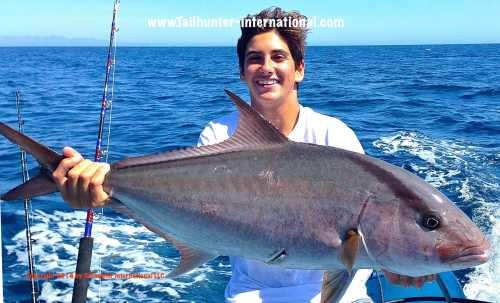 amberjack luke tags small 6-14