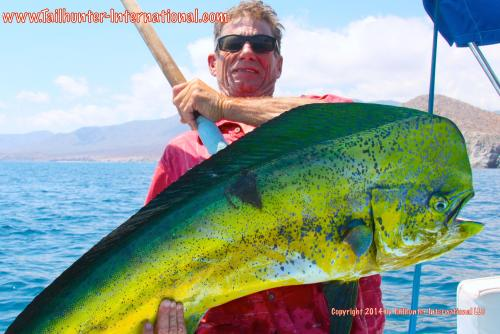 Randy Payne tags small dorado 8-14