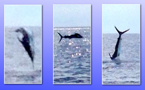 McKenzie marlin jumping collage 8-14
