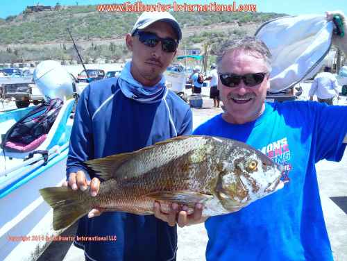 Pargo mike delaney tags small 9-14