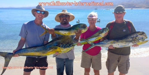 dorado small tags Doug Duval Judie Pierce Bill Harvey dorado 11-14