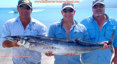 wahoo tags gary glen austin small 10-14