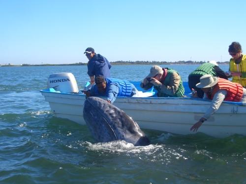 whaleswdennis 321