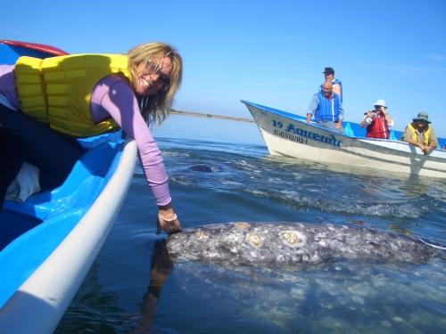 whaleswdennis 413