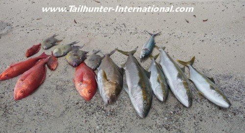 yellowtail pargo snapper triggers sierra tags