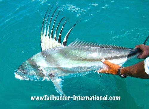 La paz las arenas muertos bay fishing report for week for Rooster fish pictures