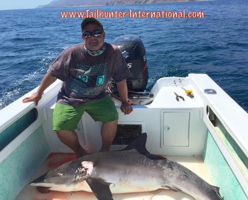 shark phil okamoto tags 6-15