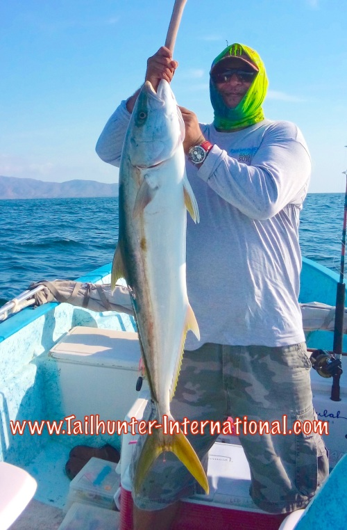 yellowtail jorge tags 8-15