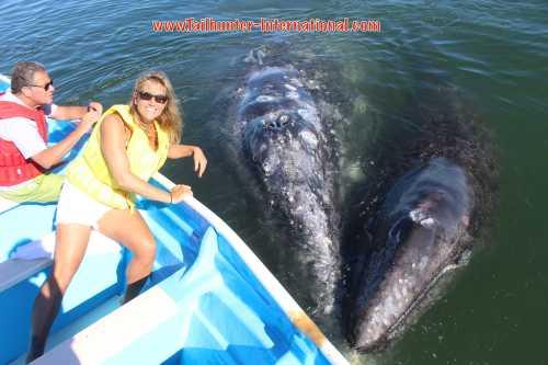 Amy kasper 1 whales