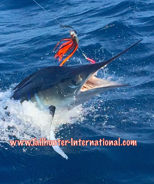 Marlin release 1-16 tags