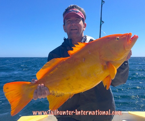 golden grouper ken 2-16 tags