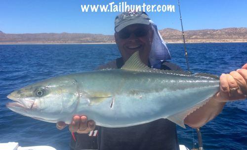 Pete Holland yellowtail tags 5-18