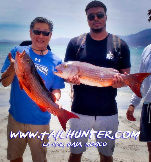 Some tasty and hard fighting pargo liso/ mullet snapper that are in spawn mode right now. Gavin Chun and Navin Ramharak on the beach with the great shot. Fish much larger get lost in the rocks when they are schooling like this.