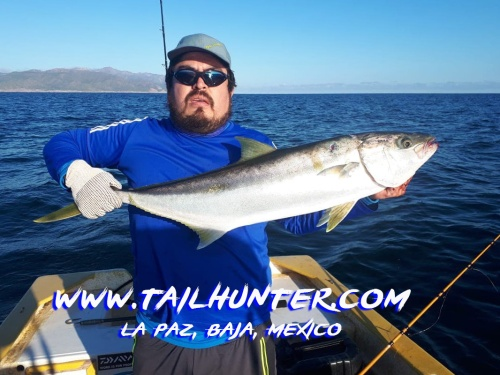 Santiago gamaliel yellowtail 1-20 tags